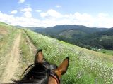 riding horse above valley